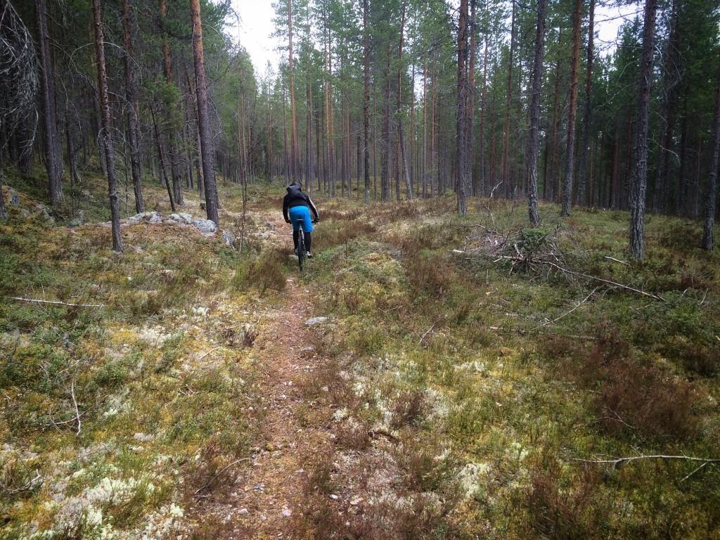 Turtips mtb – Storhogna, Vemdalen och Björnrike