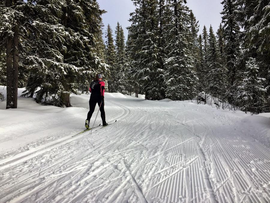skidorna