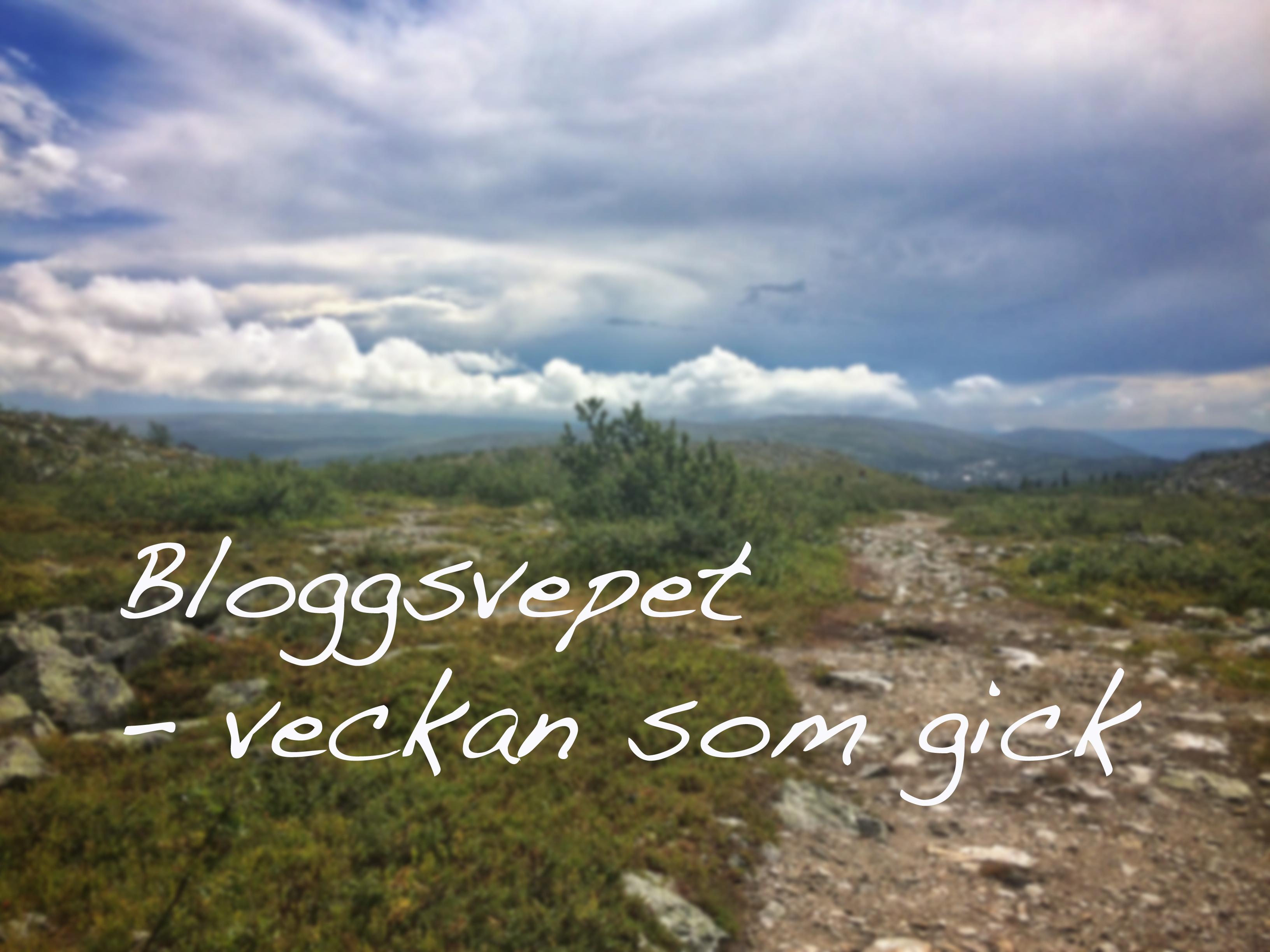bloggsvepet